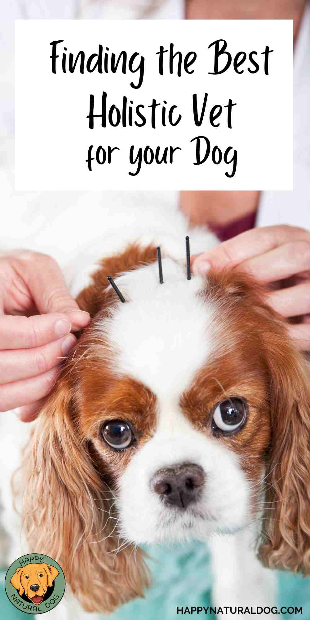 How to Find a Holistic Veterinarian