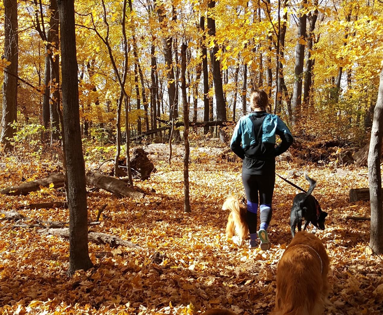 Kickoff blog – Why the Happy Natural Dog?