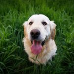 Home Remedies for Dog Allergies: How to Stop the Itching Naturally!