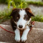 Is Natural Flea and Tick Repellent for dogs Effective?