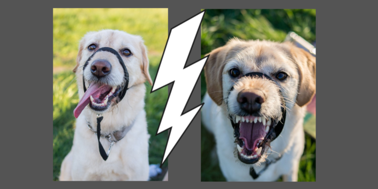 Fear Aggression in Dogs: Causes, Training Ideas, and Hope
