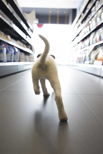 dog shopping for discount pet supplies in pet store