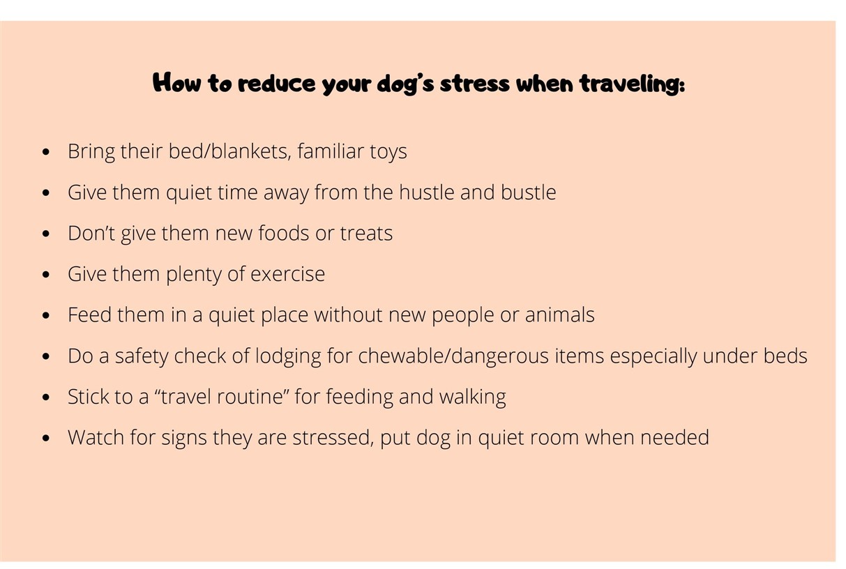 how to reduce dogs stress when traveling