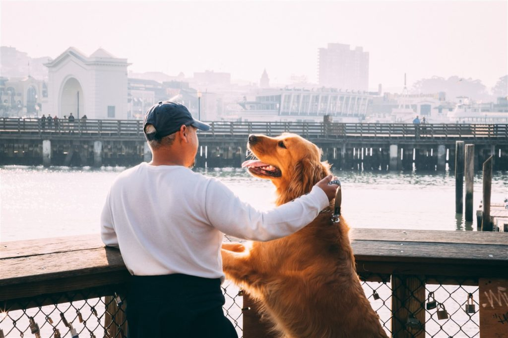 man traveling with dogs in the city