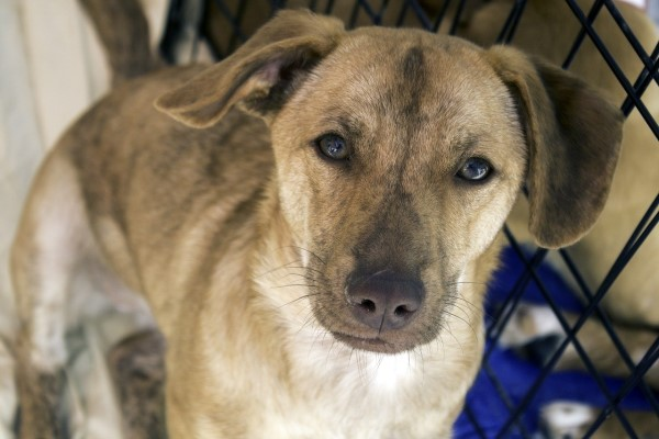 Bringing Home a Rescue Dog: 8 critical things you must know
