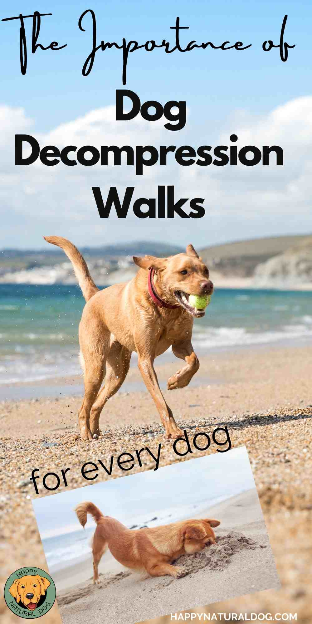 Dog Decompression Walks