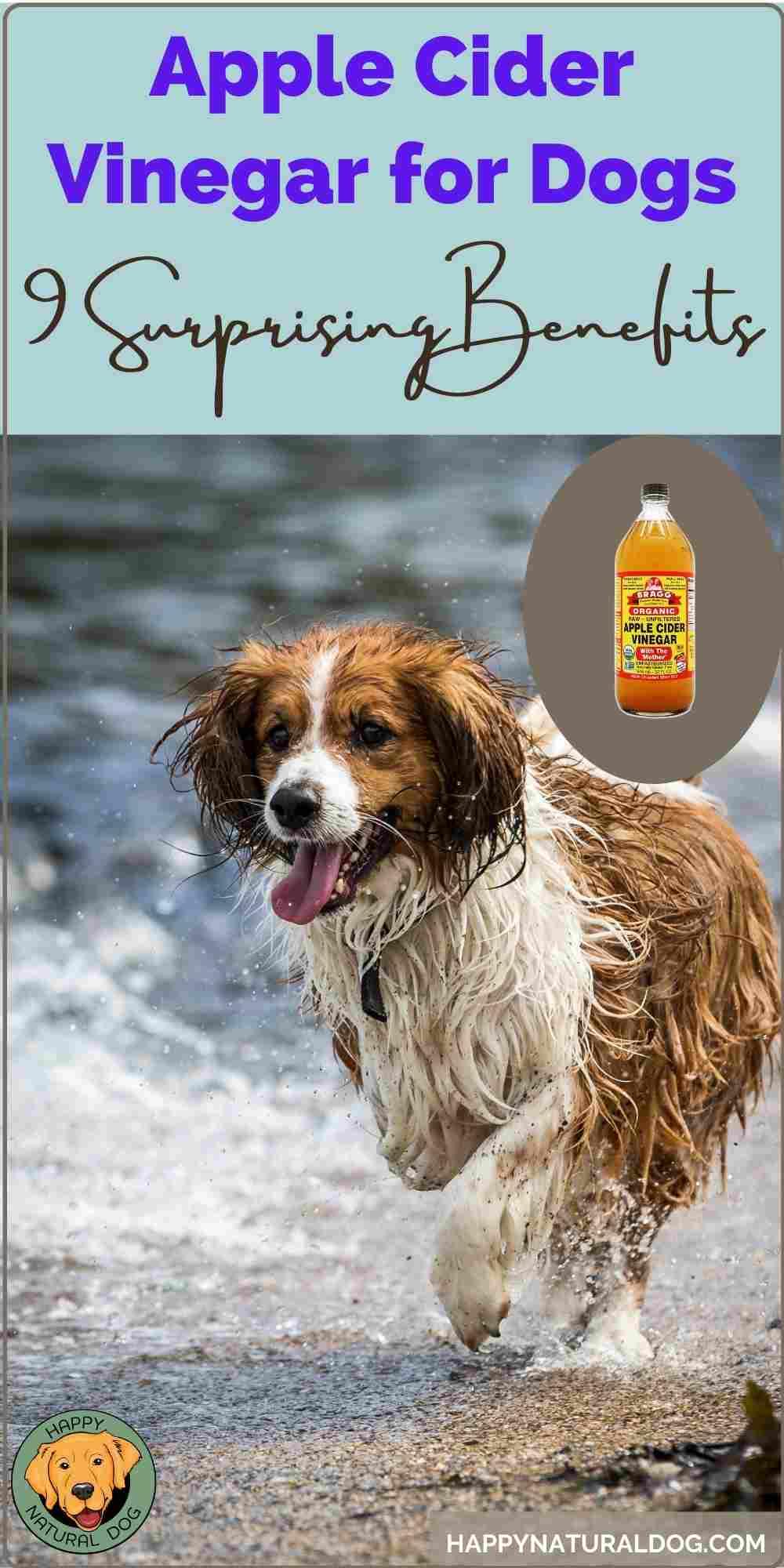 benefits of apple cider vinegar for dogs