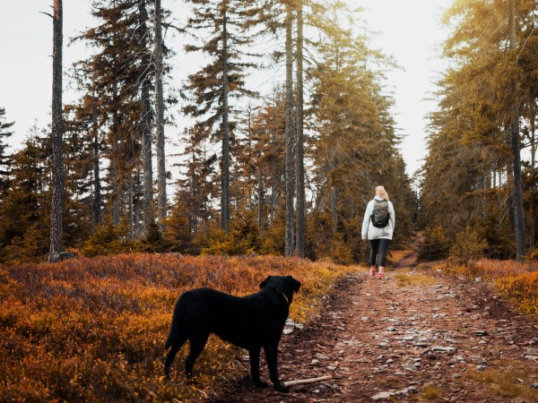 dog decompression walks in the woods can help relieve stress in dogs