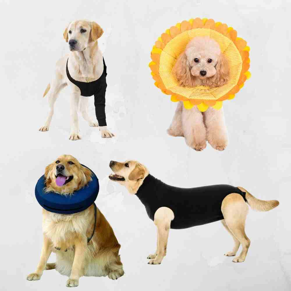 10 Comfortable Cone of Shame Alternatives That Work!