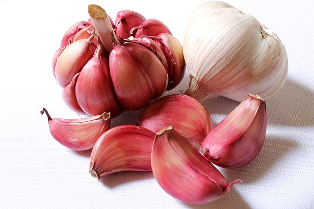 Garlic bulbs for use on giardia in dogs