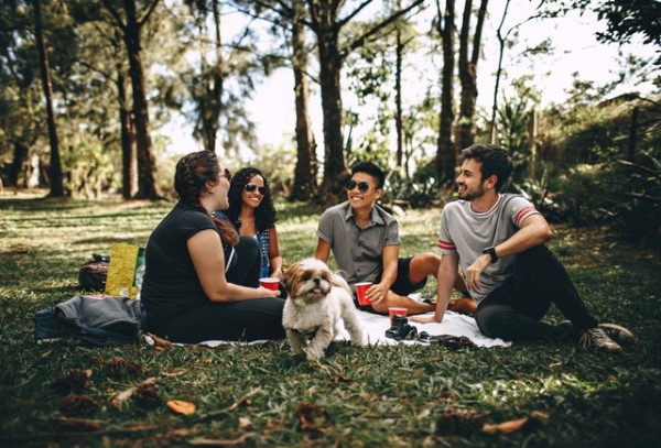 group of people with dogs being social