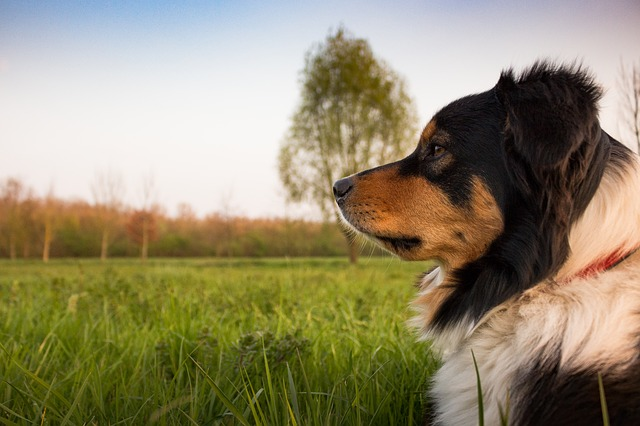 relaxed dog during successfull counterconditioning