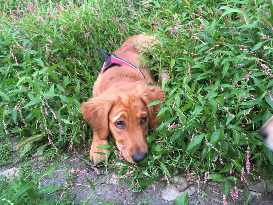 Natural Remedies for Seasonal Allergies in Dogs