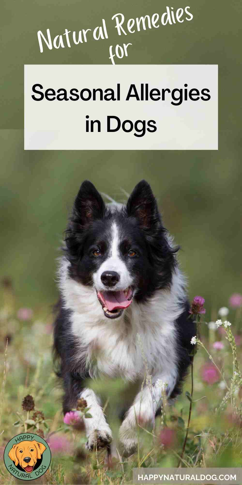 Natural Remedies for Seasonal Allergies in Dogs pin