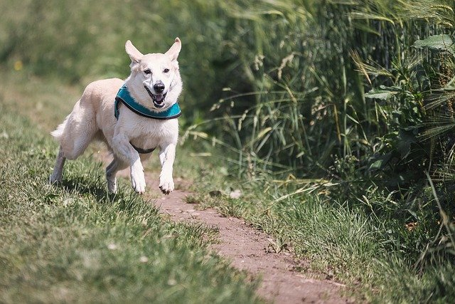 dog running to boost the dogs immune system
