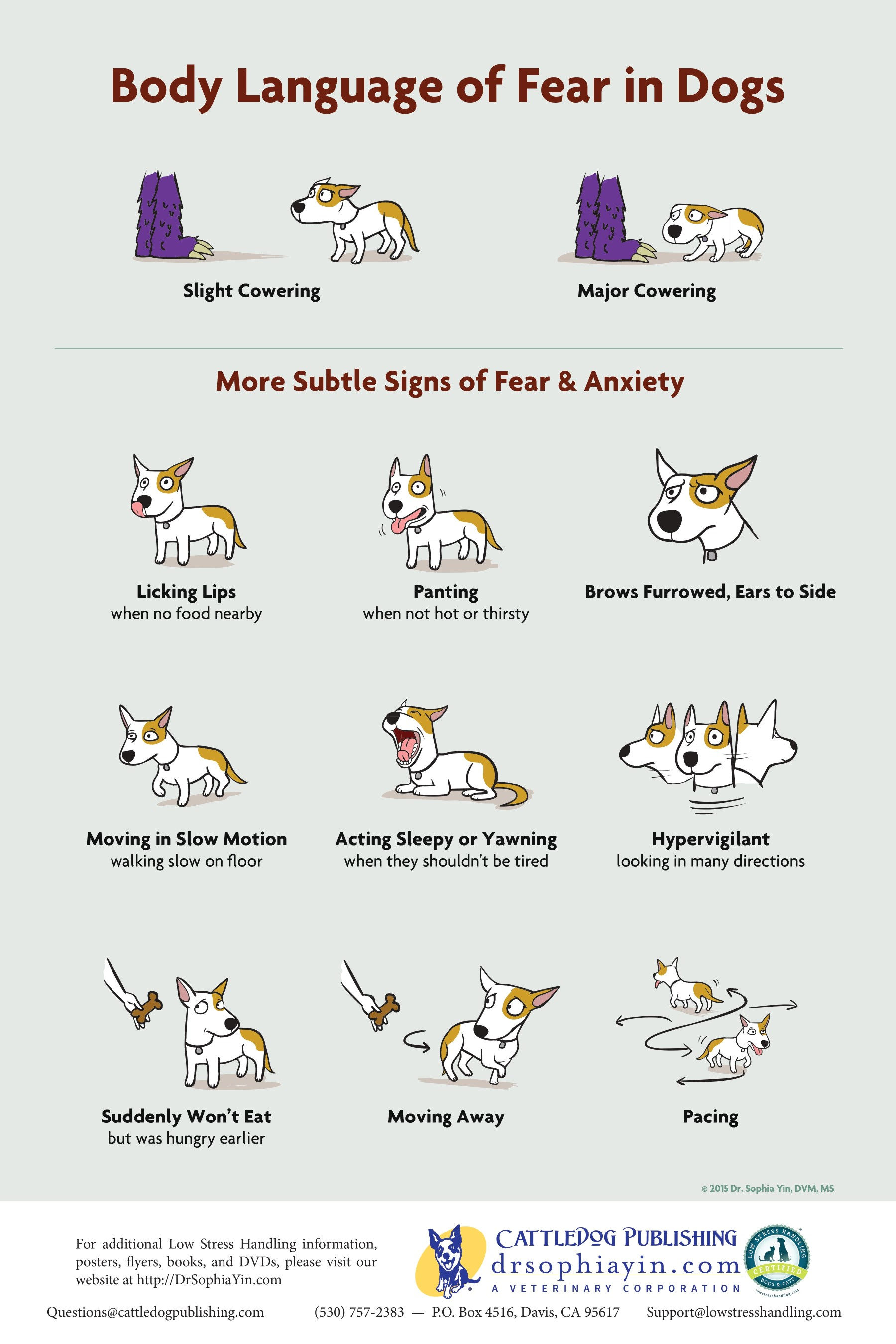 Body Language of Fear in Dogs poster by Dr Sophia Yin