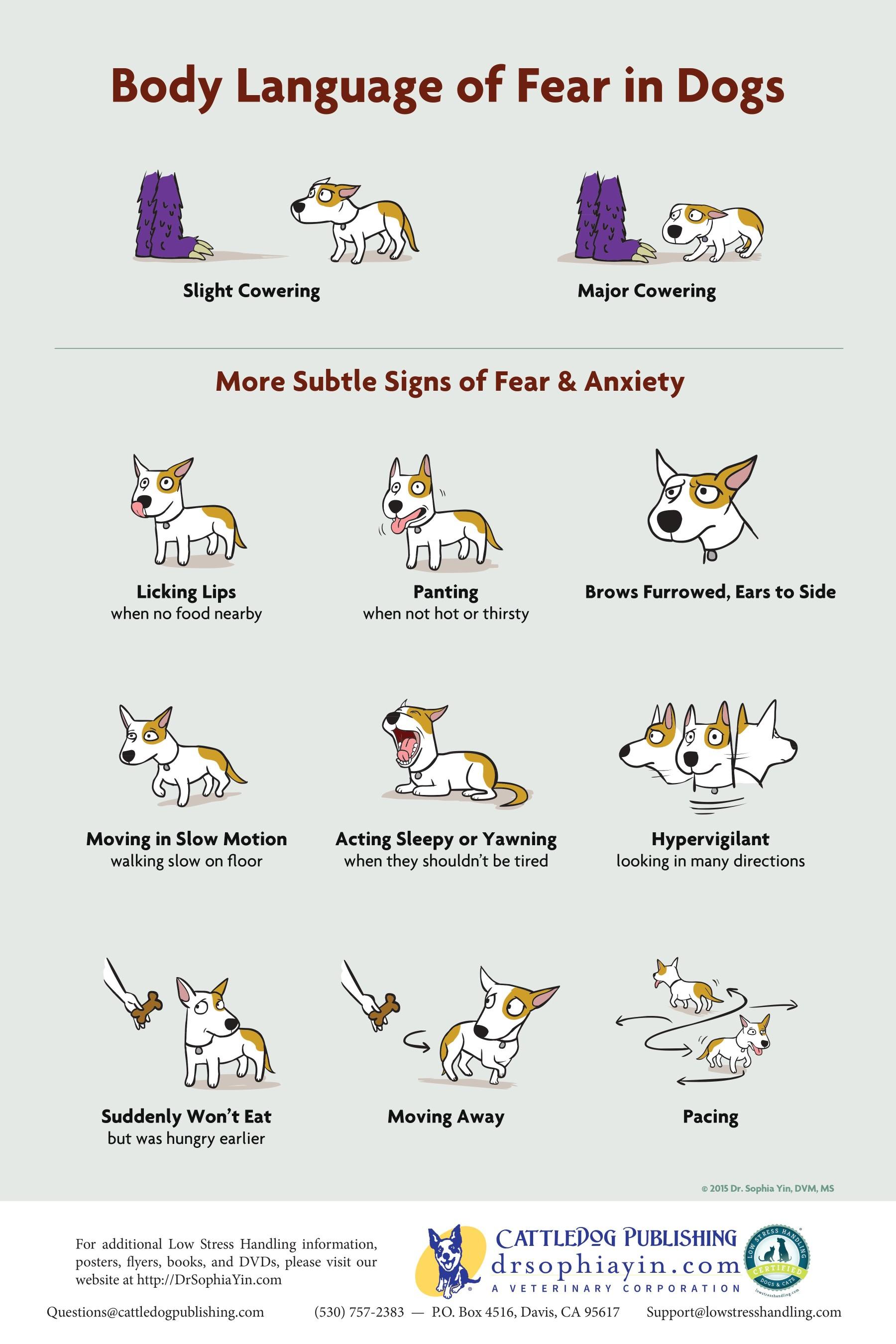 Body Language of Fear in Dogs by Dr Sophia Yin