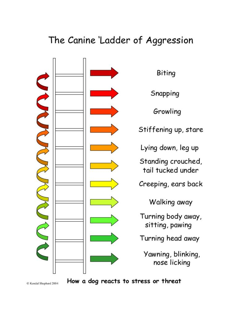 The Ladder of Aggression describing aggressive dog behaviors in ascending order as seen in resource guarding in dogs.