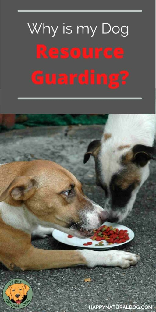 Resource Guarding in Dogs Pin