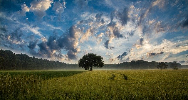 beautiful field with tree in the middle