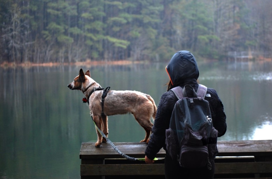 dog on dock overlooking water signifying one way dogs relieve stress and anxiety