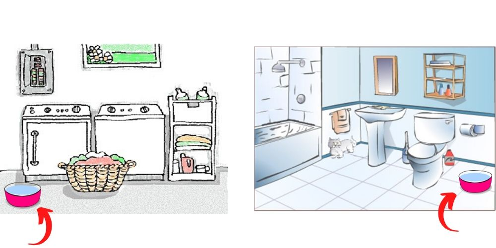 dog water dishes in separate rooms