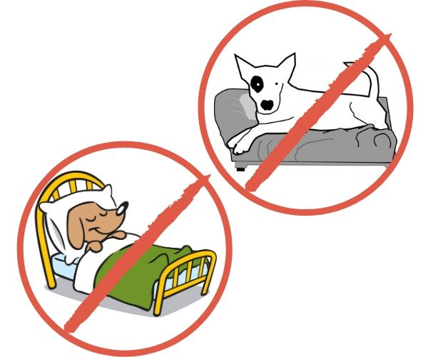 keep dogs off furniture signs