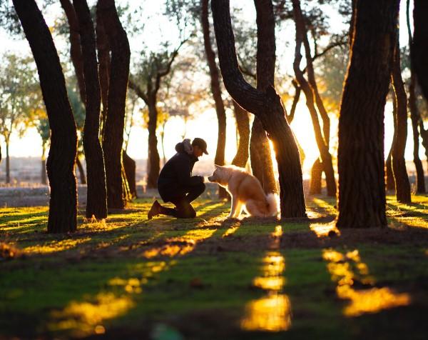 man and dog training outside