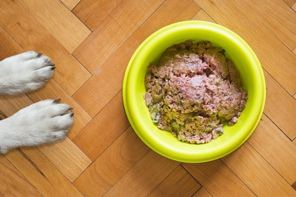 canned dog food in a bowl