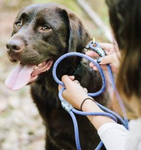 Flowfold Trailmate dog leash