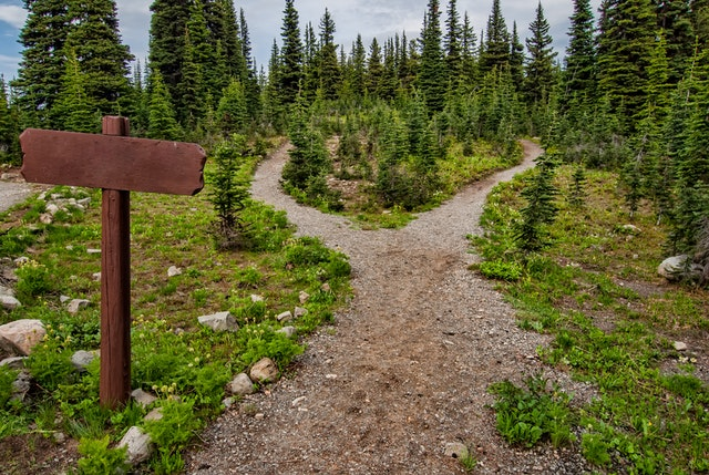 Hiking trail in alpine woods by James Wheeler