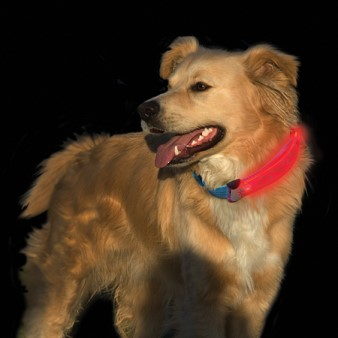 Nite Dawg LED Collar cover on dog