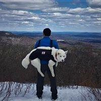 man carrying siberian husky in Pack a Paw harness on his back