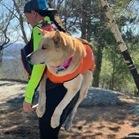 Woman carrying siberian husky in Pack a Paw harness on her back