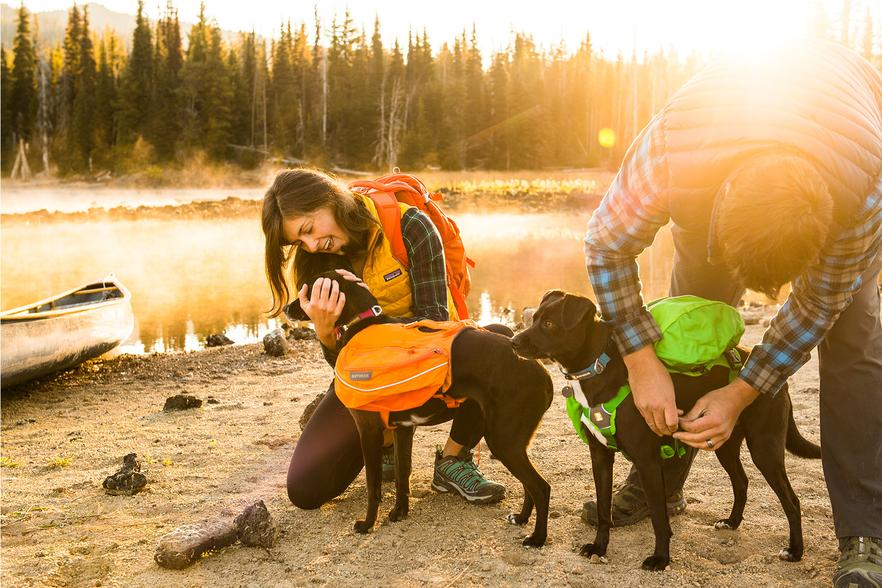 Two dogs in hiking gear packs with 2 humans by a river