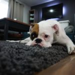 Symptoms of Kidney Stones in Dogs & Home Remedies That Help Prevent Them