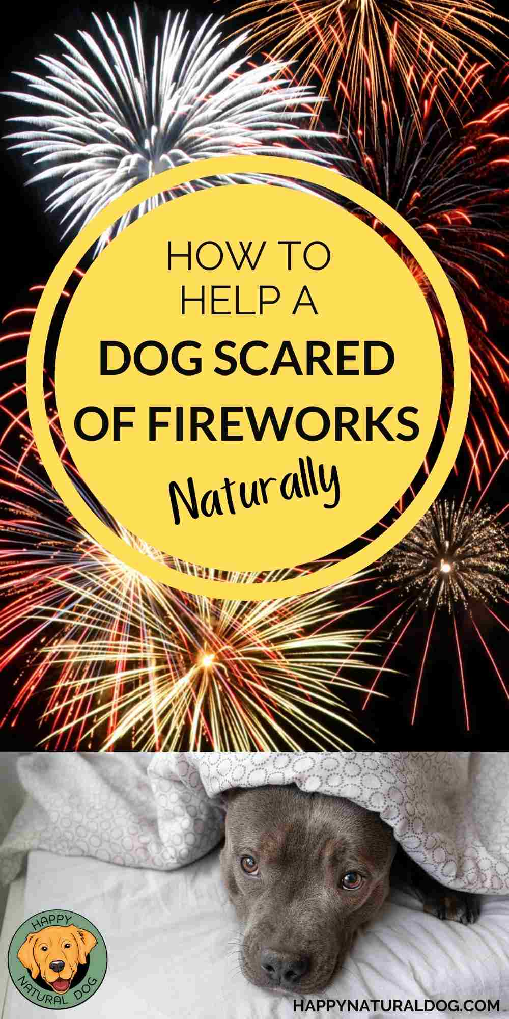 How to Help a dog scared of fireworks