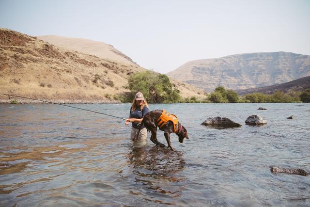 dog wearing life jacket in water