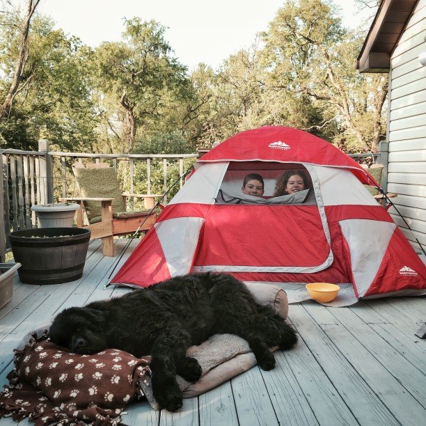 kids and dog camping on deck by Lori