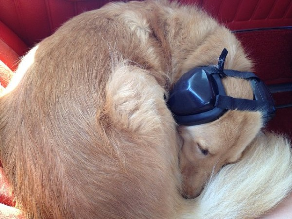 Mutt Muff Dog Headphones