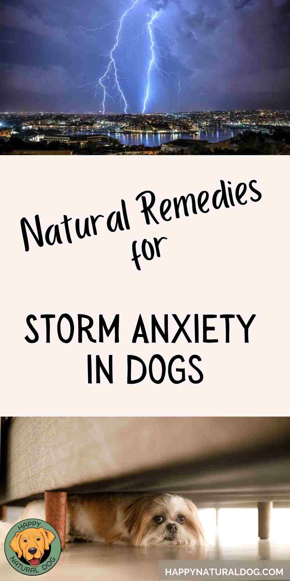 Dog Thunderstorm Anxiety