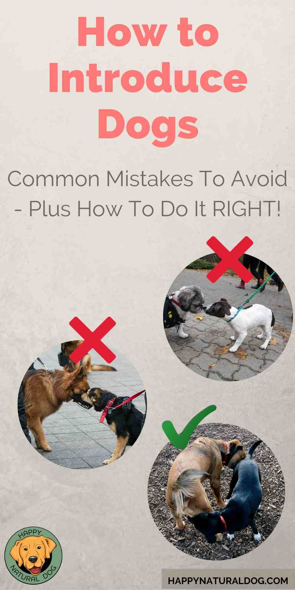 How to Introduce Dogs to Other Dogs pin