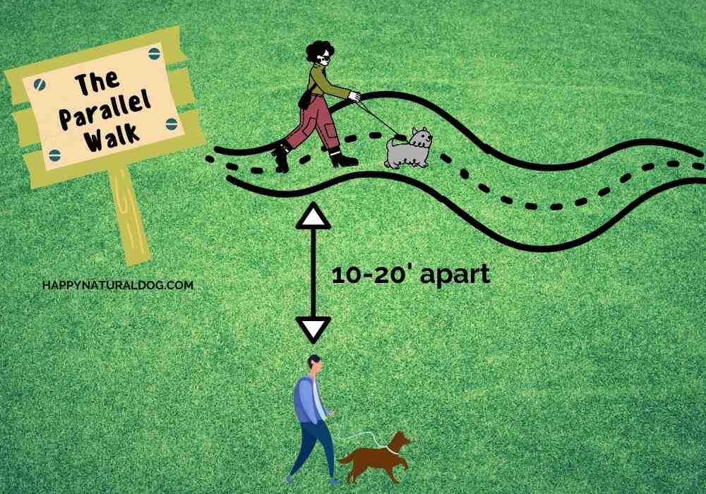 The Parallel Walk - diagram of how to introduce dogs using this method