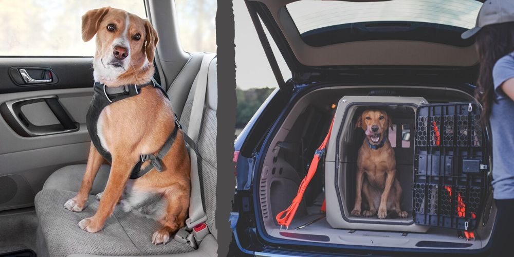 Crash Tested Dog Seat Belts and Crates for Car Travel in 2020