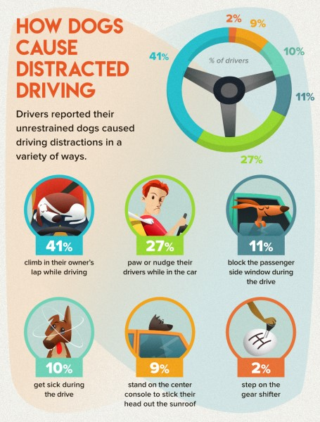 How dogs cause distracted driving poster