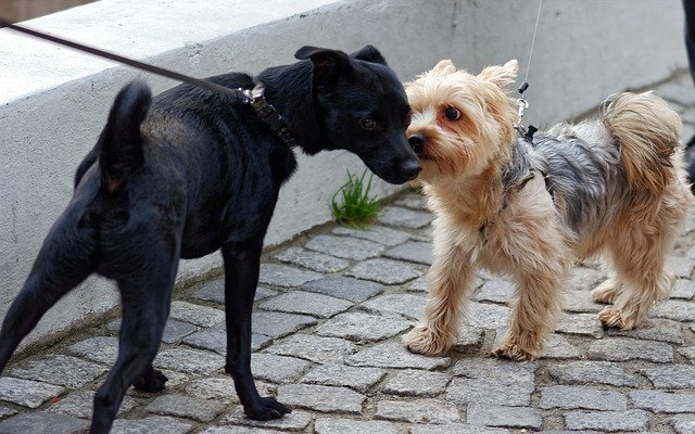 tense dogs sniffing face to face while owners hold leashes too tight