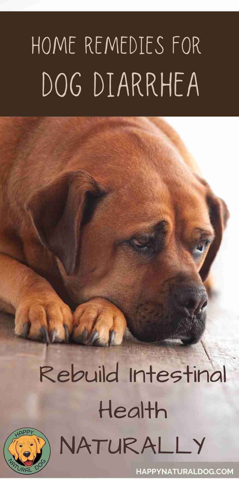 Home Remedies For Dog Diarrhea