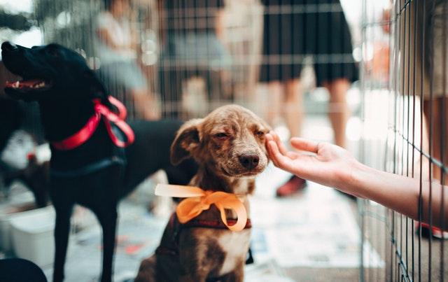 rescue dog adoption by Helena Lopes