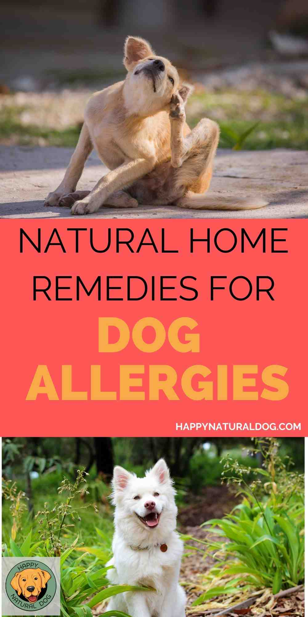 Natural home remedies for dog allergies pin 2