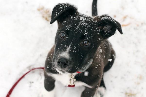 Tico as a puppy